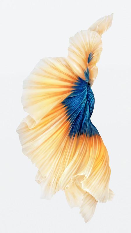 iPhone-6s-Pez-Dorado-Fondo de pantalla