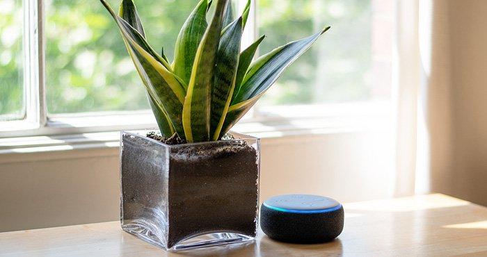 Amazon Echo Dot Plant 700px